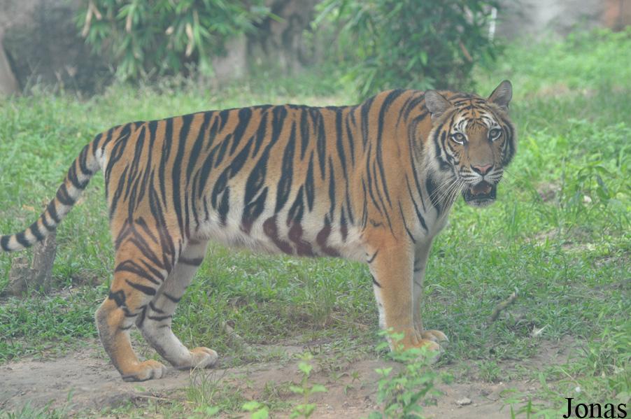 les zoos dans le monde dai nam van hien