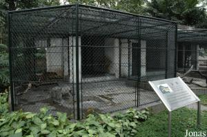 Cages des chats de Temminck