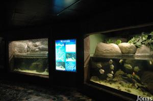 Aquariums tropicaux