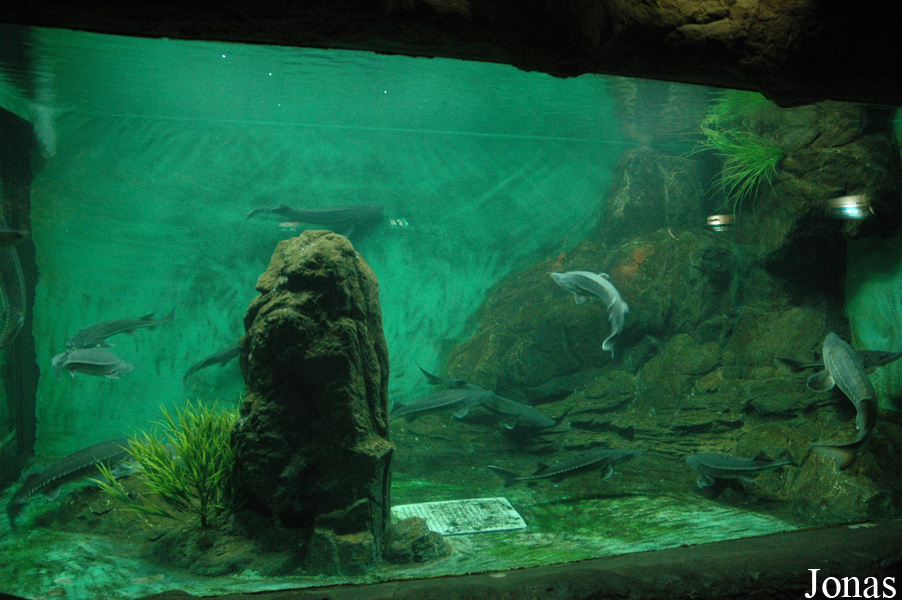 Freshwater Creatures Hall Freshwater Creatures Hall