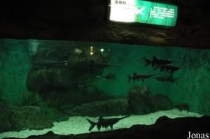 Freshwater Creatures Hall