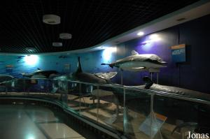 Marine Creatures Exhibition Hall