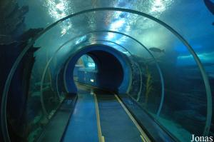 Submarine Tunnel