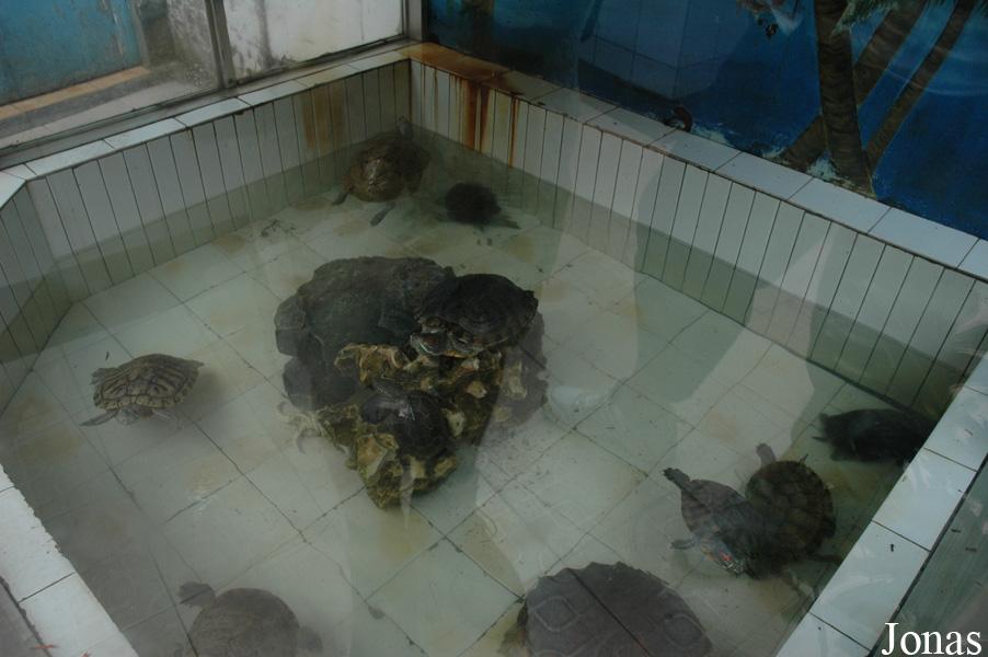 Les zoos dans le monde heping park - Bassin pour tortue aquatique villeurbanne ...