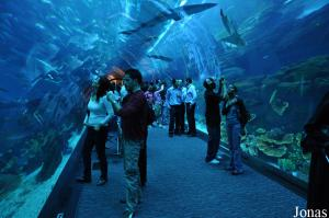 Tunnel du Dubai Aquarium & Discovery Centre