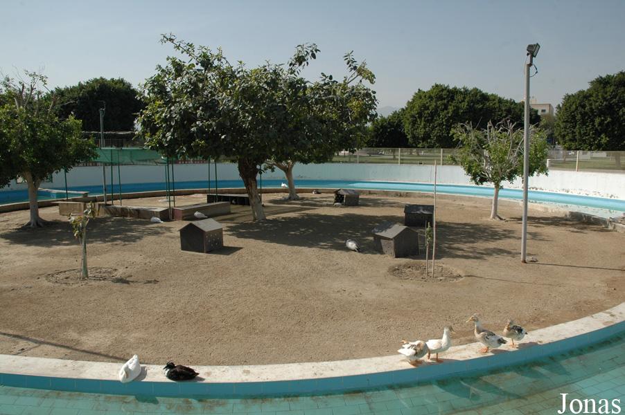 Les zoos dans le monde sadra park - Bassin canard beton orleans ...
