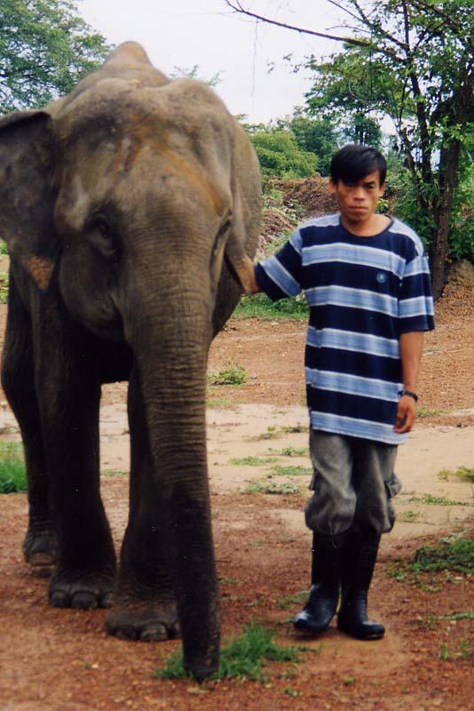 Ban Keun Laos  City new picture : Éléphant son soigneur Bassin des crocodiles