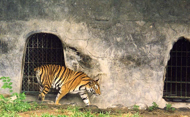 Ban Keun Laos  City pictures : Les Zoos dans le Monde Lao Zoo