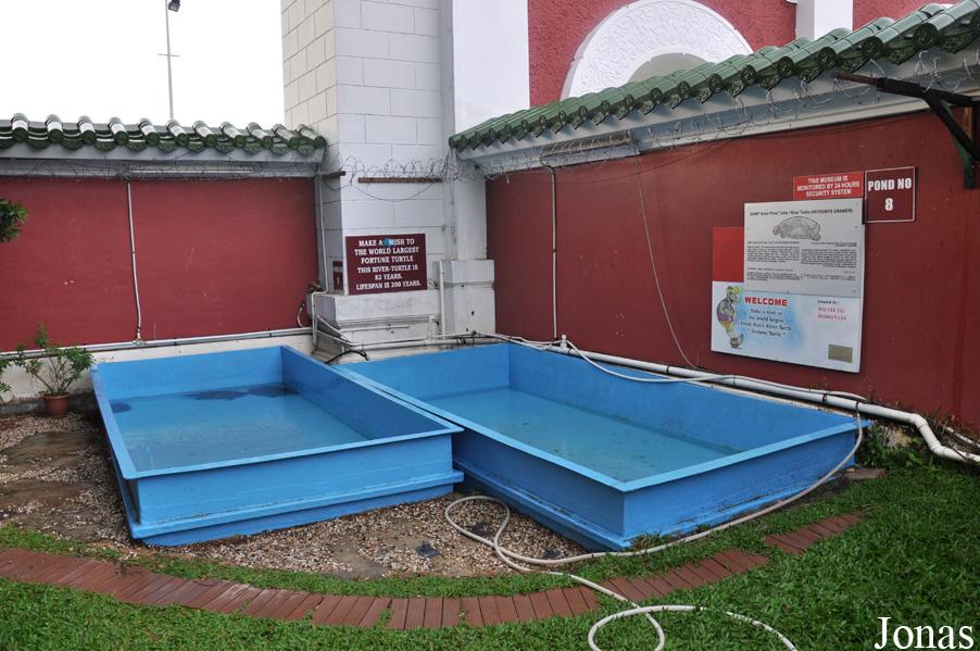 Bassin pour tortue aquatique images - Bassin pour tortue aquatique villeurbanne ...