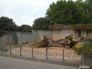Installation des ours de Syrie