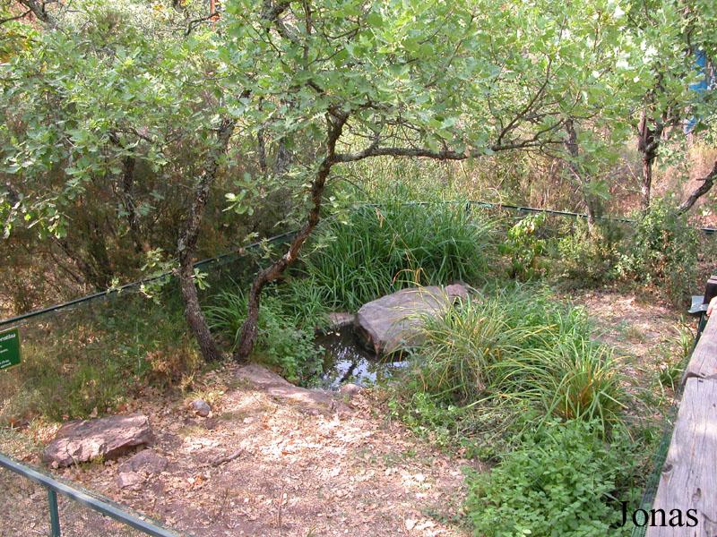 D co bassin tortue hermann 18 bassin pour tortue for Bassin exterieur pour tortue de floride