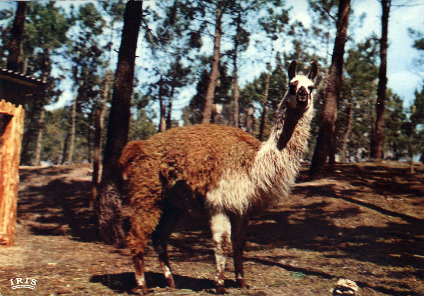 Les Zoos dans le Monde - Zoo de la Palmyre