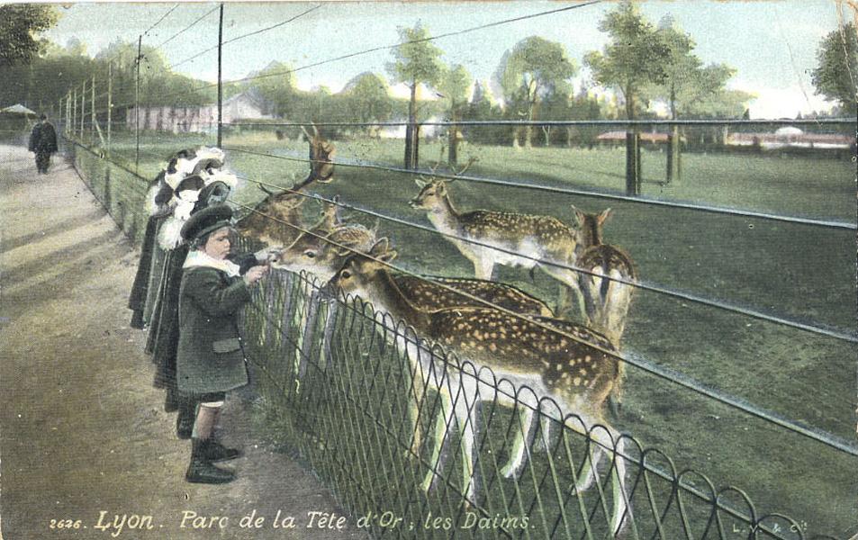 Les zoos dans le monde jardin zoologique de la ville de lyon - Jardin zoologique de la ville de lyon ...