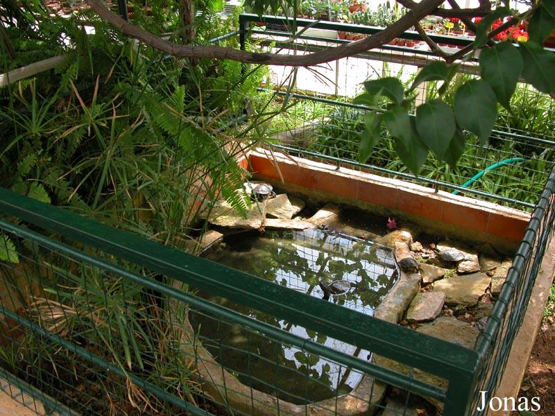 Les zoos dans le monde jardin exotique de sanary - Bassin pour tortue aquatique villeurbanne ...