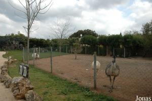 Nandus and emus enclosure