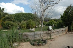 Flamingos enclosure