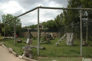 Ring-tailed lemurs enclosure