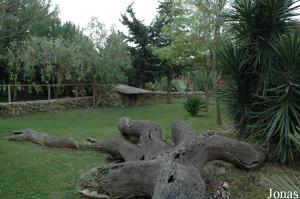 African spurred tortoises enclosure