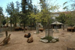 Enclosure of the American bisons
