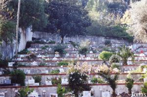 Cemetery for domestic animals