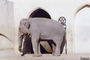 Male Asian elephant Ganapati sent to Spain in 2004