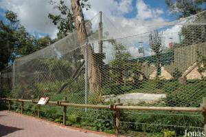 New enclosure of the Persian leopards