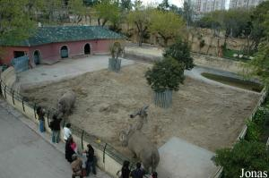 White rhinos enclosure viewed from the cable lift