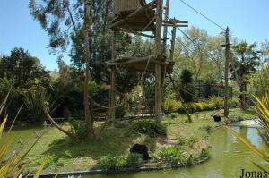Island of the siamangs family