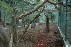 Aviary for black-casqued hornbills and Kenya guineafowls