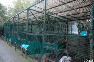 Row of aviaries for pheasants