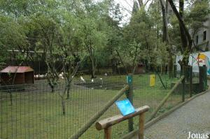 Enclosure for flamingos