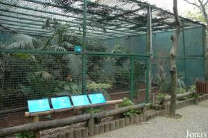 Aviary for gouras and other doves