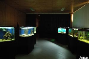 "One of the rooms inside the ""Arca de Noé"" with tanks for fish and amphibians"