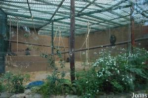 Cage of the chimpanzees