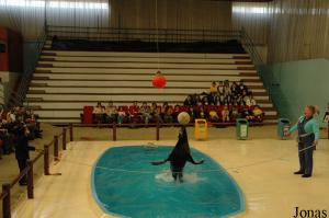 Show with the fur seal