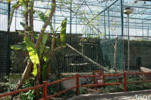 Cages of the black and spotted leopards