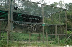 Cage of the white-cheeked gibbon