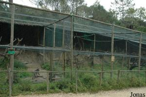 Primates cages for mangabey and guenons