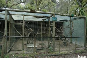 Cages for vervet and rhesus monkeys
