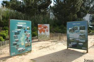 Signs for the EAZA Madagascar Campaign