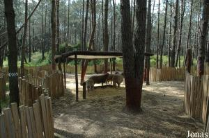 Sheep enclosure in the children's zoo