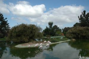 Enclosure for flamingos and ibises