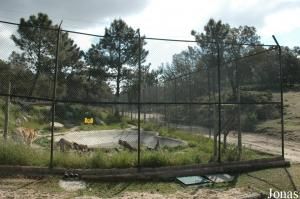 Tigers enclosure in the safari
