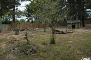 Red-necked wallabies enclosure