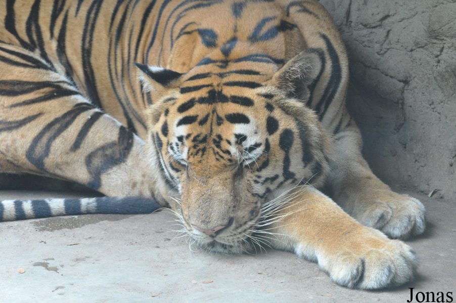 les zoos dans le monde dusit zoo