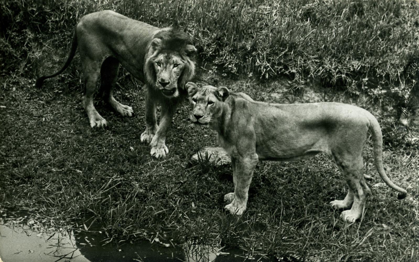les zoos dans le monde jardin zoologique de kinshasa