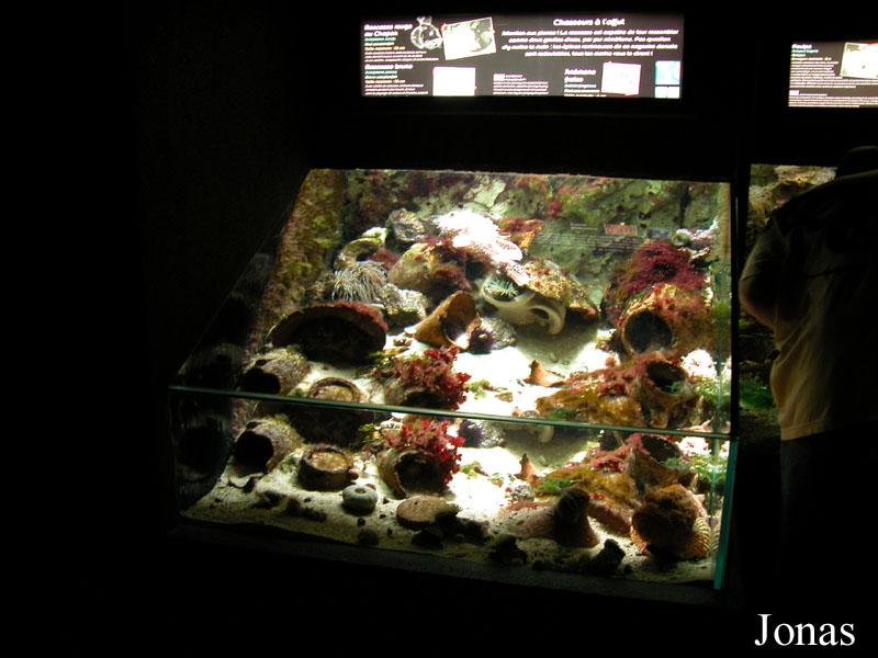 les zoos dans le monde grand aquarium de saint malo. Black Bedroom Furniture Sets. Home Design Ideas