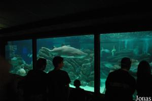 Sharks tank in the aquarium