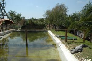 Crocodiles and alligators exhibit