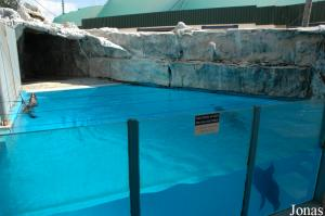 One of the pools for seals and sea lions